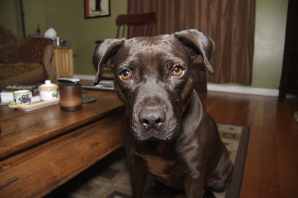 Five Things My Beat-Up Old Pitbull Taught Me About Love